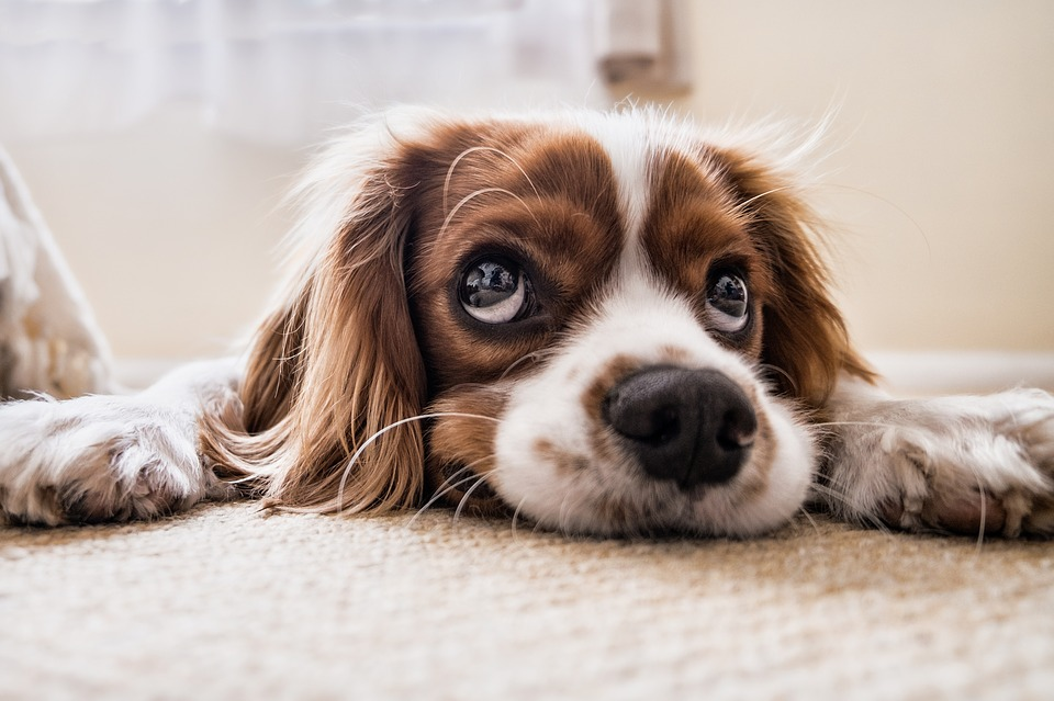 How Long You Can Leave Your Dog Alone
