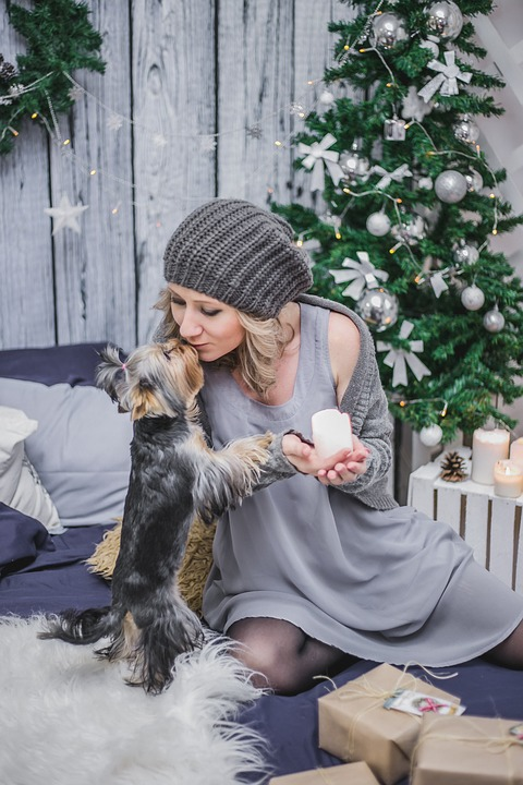 Cost-Effective Reasons to Hire a Pet Sitter this Holiday Season