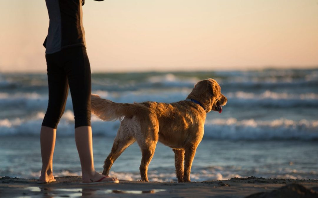 How Walking With Your Dog Can Be Mindful