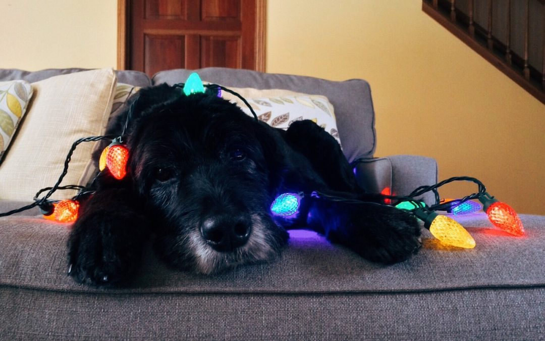 How The Holidays Effect Your Pet's Mood